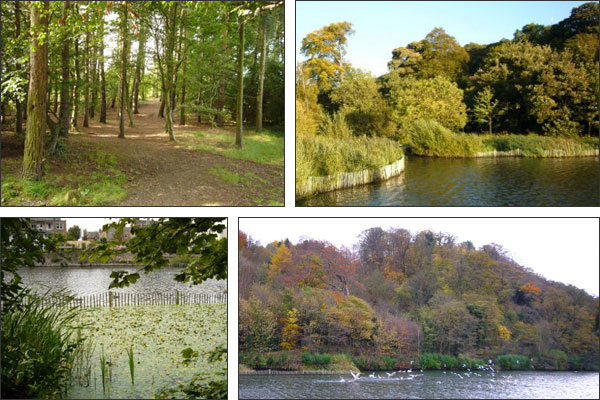 The Friends Of Craiglockhart Woods and Nature Trail